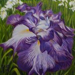 Irises, H. N. Chrysanthemum
