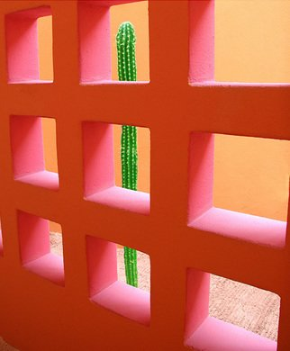 Artist: Harvey Horowitz - Title: Cabo Cactus Squares - Medium: Color Photograph - Year: 2006