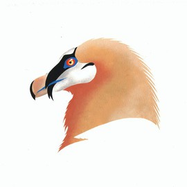 Of Feathers and Beaks: Bearded Vulture