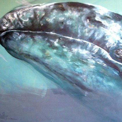, Blue Whale From Animal Na, Animals, Request Price