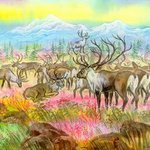 Reindeers In The Arctic, Igor Moshkin