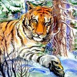Tiger In The Winter Forest, Igor Moshkin