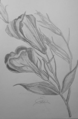 Still Life Pencil Drawing by Eve Co Title: California Poppies, created in 2009