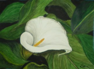 Eve Co: 'Calla Lily in Leaves', 2010 Watercolor, Floral.  Calla Lily in Leaves - This painting depicts a lone calla lily engulfed by leaves.  The lily could be suffocating in its own reality, but it bursts forth with such simplicity and beauty that I had to paint its awesomeness. . .  This painting is NOW for sale, I donated it to the...