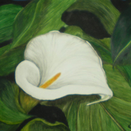 Calla Lily In Leaves, Eve Co