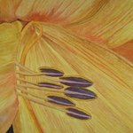 Dreamland Lily Closeup By Eve Co