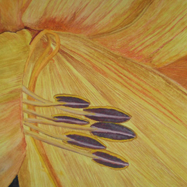 Dreamland Lily Closeup
