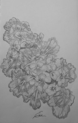 Still Life Pencil Drawing by Eve Co Title: Geraniums, created in 2009