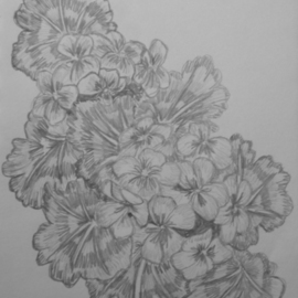 Eve Co Artwork Geraniums, 2009 Pencil Drawing, Still Life