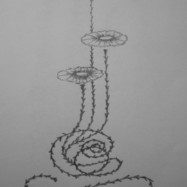 Eve Co Artwork Morning Glory Bud Trio, 2010 Pencil Drawing, Botanical