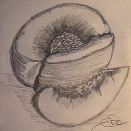 Eve Co Artwork Peach, 2009 Pencil Drawing, Still Life