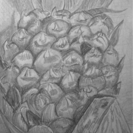 Eve Co Artwork Pineapple, 2009 Pencil Drawing, Still Life
