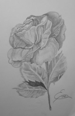 Still Life Pencil Drawing by Eve Co Title: Rose, created in 2009