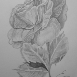 Eve Co Artwork Rose, 2009 Pencil Drawing, Still Life