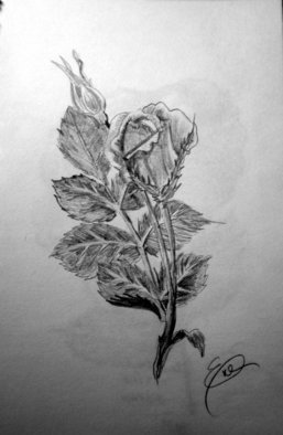Still Life Pencil Drawing by Eve Co Title: Rosebud, created in 2009