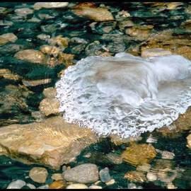 Matthew Hutton Artwork ICE AMOEBA, 2004 Color Photograph, Nature