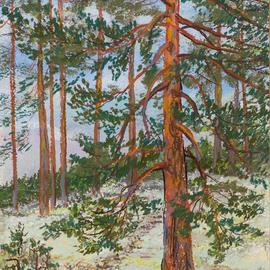 Large Pine