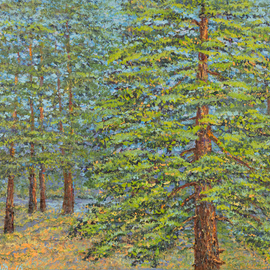 Large Pine and Forest