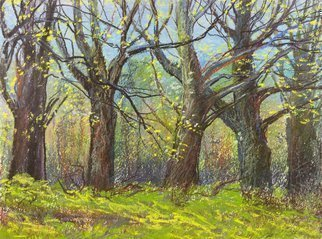 Irina Maiboroda: 'through the forest', 2016 Pastel Drawing, Landscape.    landscape, abstract, impression, colorful, sun, morning, spring, forestwork is with passepartout 50 A-- 40 cm     ...
