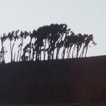 trees on a hill By Bengt Stenstrom