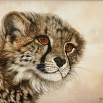 Cute Little Cheetah Cub, Jacquie Vaux