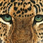 Eyes of Leopard By Jacquie Vaux