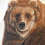Old Grizz   Male Grizzly Bear, Jacquie Vaux