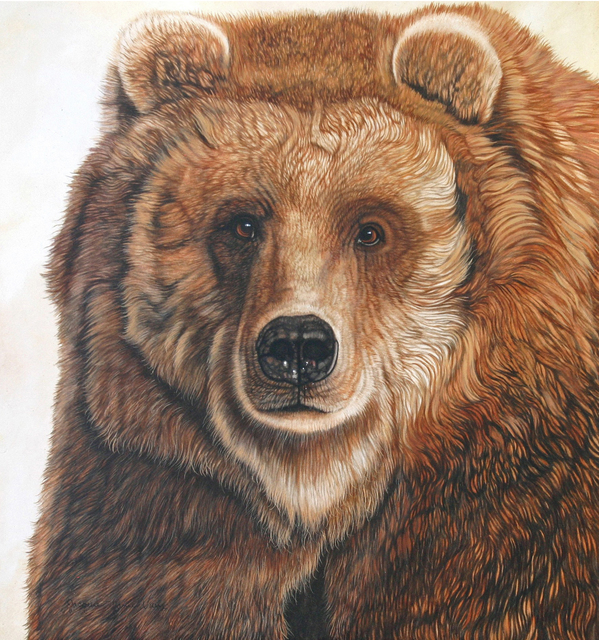 Jacquie Vaux Artwork Old Grizz Male Grizzly Bear