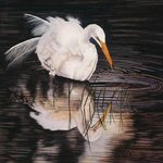 Twilight Interlude   A Snowy Egret, Jacquie Vaux
