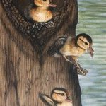 Wood Ducks Leaving The Nest, Jacquie Vaux