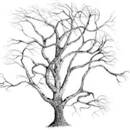 James Parker Artwork Bare Oak, 2002 Pencil Drawing, Botanical
