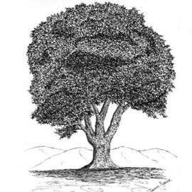 James Parker Artwork Oak3, 2002 Pen Drawing, Botanical