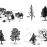 Tree Collection By James Parker