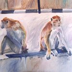 Borneo Monkeys I By Jane Spence