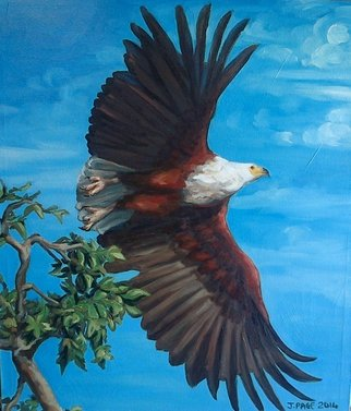 Birds Oil Painting by Janet Page Title: AFRICAN FISH EAGLE TAKES FLIGHT, created in 2014