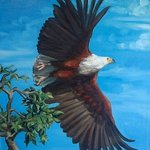 AFRICAN FISH EAGLE TAKES FLIGHT By Janet Page