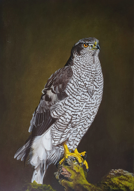 Jan Teunissen  'Bird Of Pray Hawk', created in 2021, Original Painting Oil.
