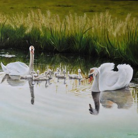 Swan Family By Jan Teunissen