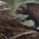 Beaver hunt By Jeff Cain