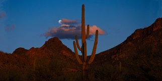 Jeff Smith: 'Cactus in the Sunset at Moonrise', 2009 Color Photograph, nature. Artist Description:  Saguaro National Forest.   ...