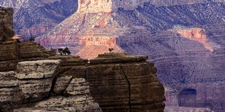 Jeff Smith: 'Tree on rock in Grand Canyon', 2009 Color Photograph, nature. Artist Description:  Grand Canyon National Park   ...