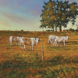 John Gamache: 'You do know we are being watched', 2016 Oil Painting, Landscape. Artist Description: Oil on Linen 12 x 24 - Cattle pasture in FR - late sunny afternoon...