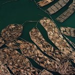 log rafts 12 port of tacoma By John Griebsch