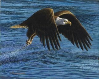 James Hildebrand: 'catch of the day', 2016 Oil Painting, Wildlife. Artist Description: Bald Eagle fishing...