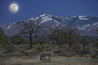 Jim Wright Artwork horsemoon, 2008 Color Photograph, Animals
