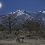 horsemoon By Jim Wright