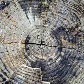 Joan Shannon: 'Tree cross section showing rings', 2011 Color Photograph, Landscape. Artist Description:  tree, ring, wood, woods, woodland, ireland, country,   ...