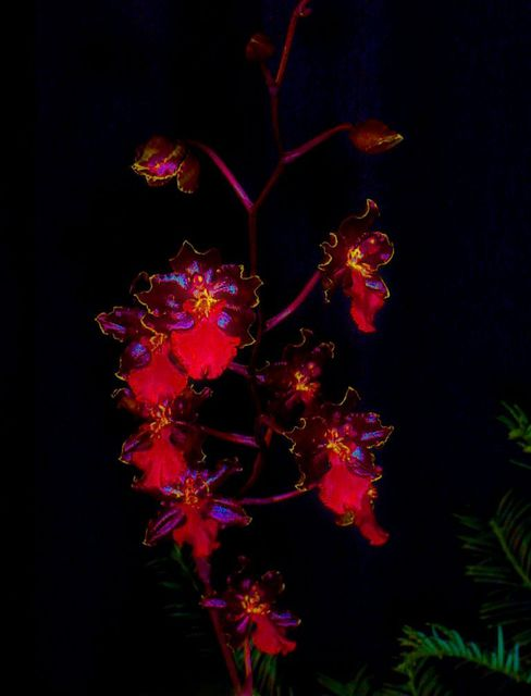 Mark Goodhew  'Orchid 2', created in 2015, Original Photography Color.