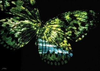 John Neville Cohen: 'Butterfly Country', 2009 Color Photograph, Landscape. Butterfly, River, Summer, fantasy, surreal, green, blue, John Neville Cohen,    ...