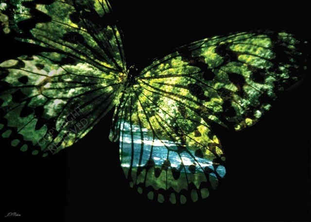 John Neville Cohen: Butterfly Country, 2009 Color Photograph